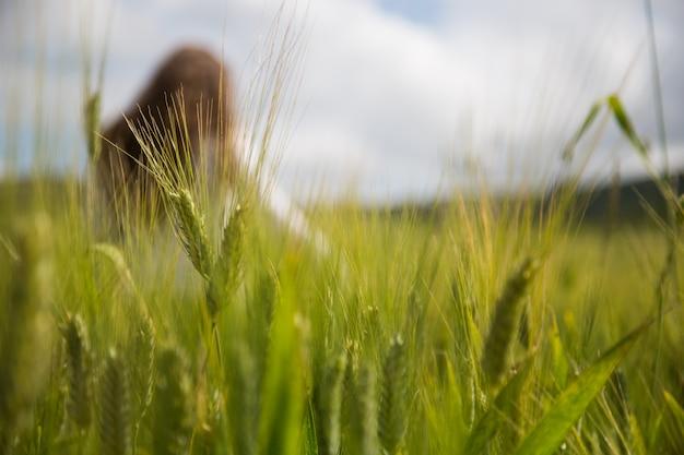 Garota turva em um campo Foto Premium