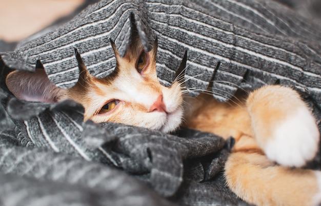 Gatinho bonitinho gengibre dormindo no cobertor cinza Foto Premium