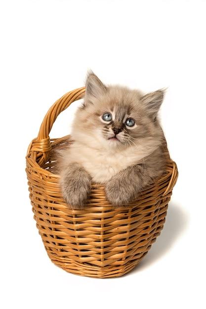 Gatinho bonitinho na cesta de vime em branco Foto Premium