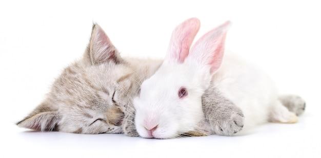Gatinho brincando com coelho Foto Premium
