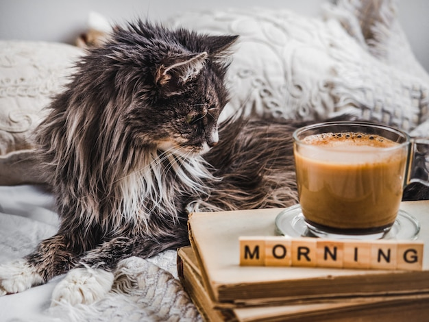 Gatinho encantador e xícara de café aromático Foto Premium