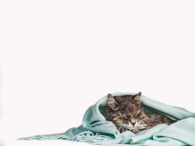 Gatinho encantador embrulhado em um lenço Foto Premium