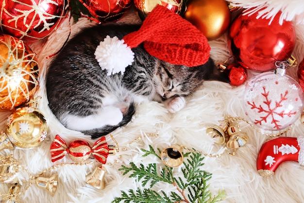 Gatinho engraçado dorme em decorações vermelhas brilhantes de natal Foto Premium