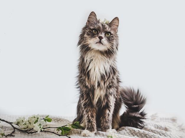 Gatinho fofo e encantador sobre um fundo branco Foto Premium