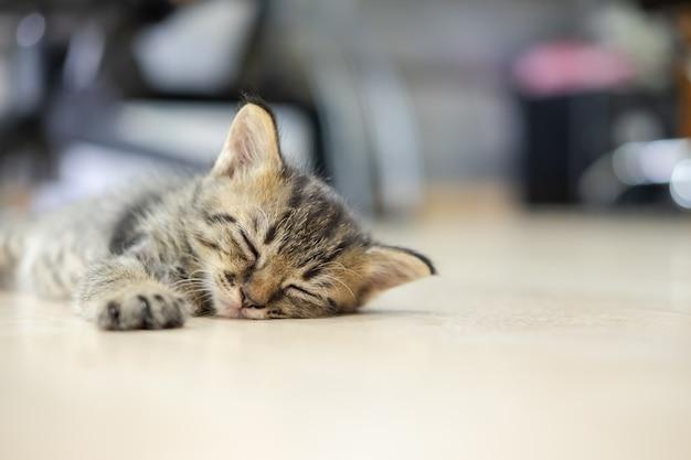 Gatinho fofo está dormindo no chão Foto Premium