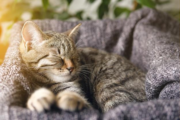 Gatinho listrado, dormindo em sua cesta Foto Premium