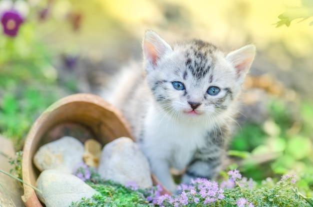 Gatinho no jardim com flores no fundo Foto Premium