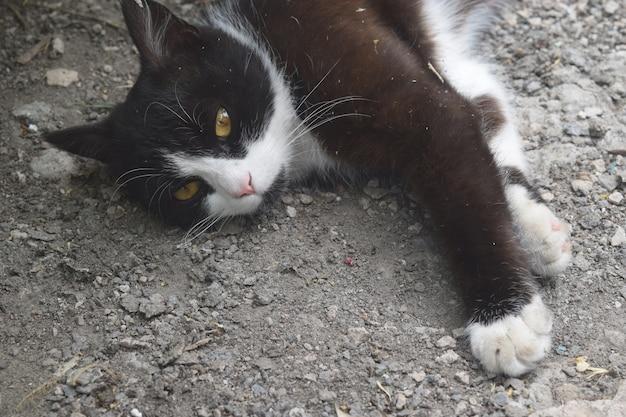 Gatinho preto bonito dormindo na rua Foto Premium