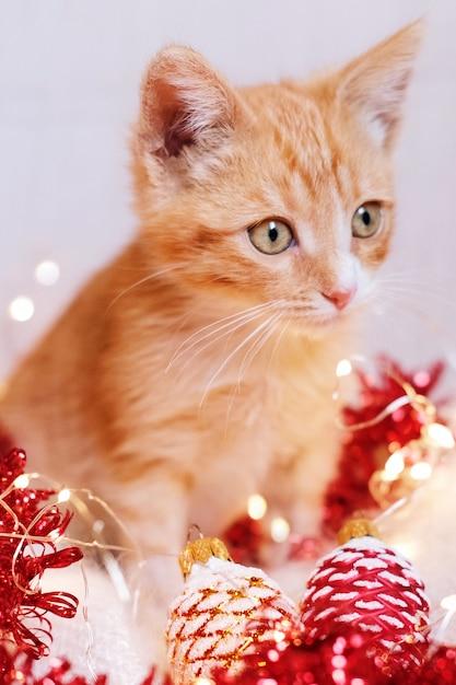 Gatinho vermelho jogando em decorações de natal Foto Premium