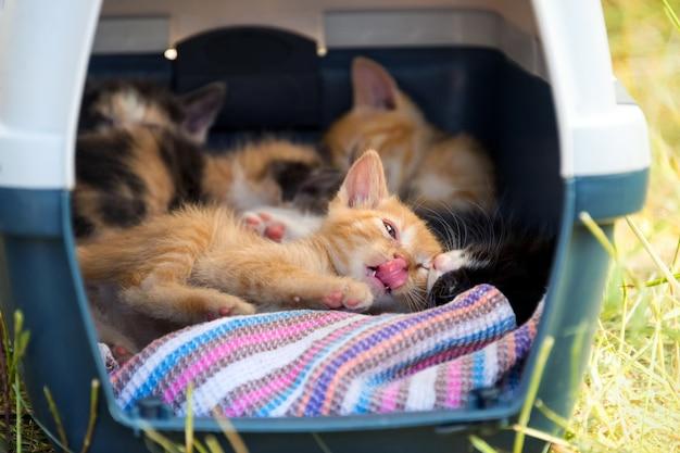 Gatinhos brincando em uma cesta portátil entre a grama Foto Premium