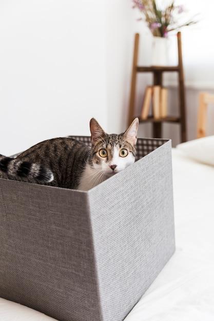 Gato adorável dentro da caixa Foto gratuita
