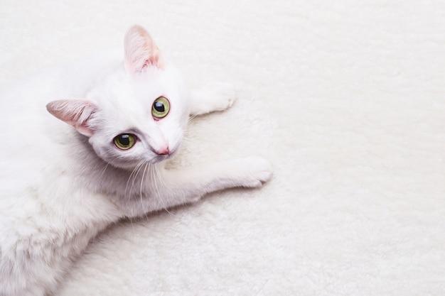 Gato adulto branco com olhos amarelos em um tapete branco e macio Foto Premium