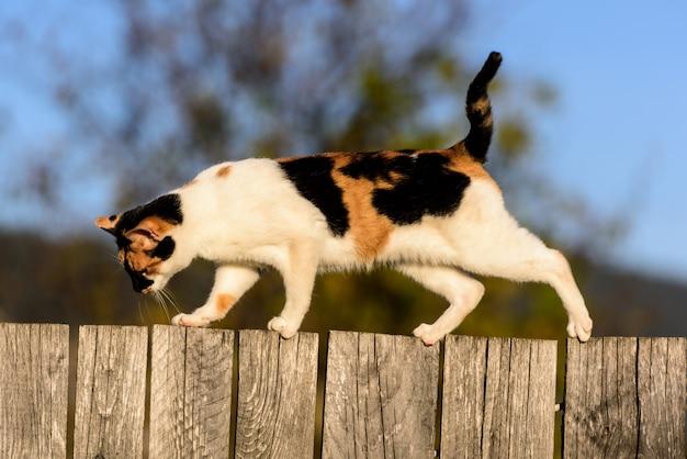 Gato andando em uma cerca de madeira na vila Foto Premium