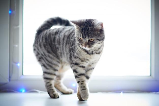 Gato bonito anda no parapeito da janela. Foto Premium
