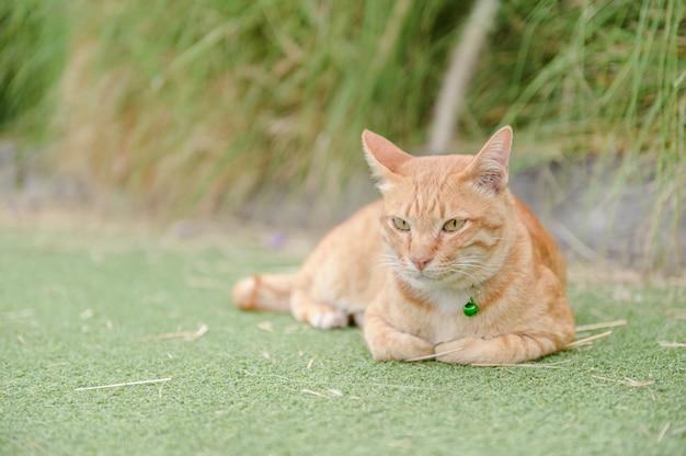 Gato bonito dormir no tapete verde Foto Premium