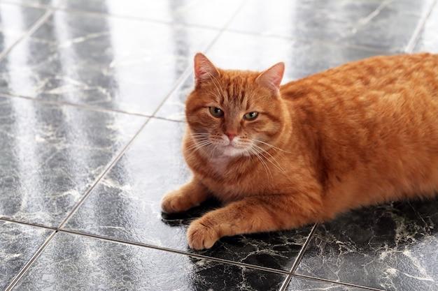 Gato bonito no chão Foto gratuita