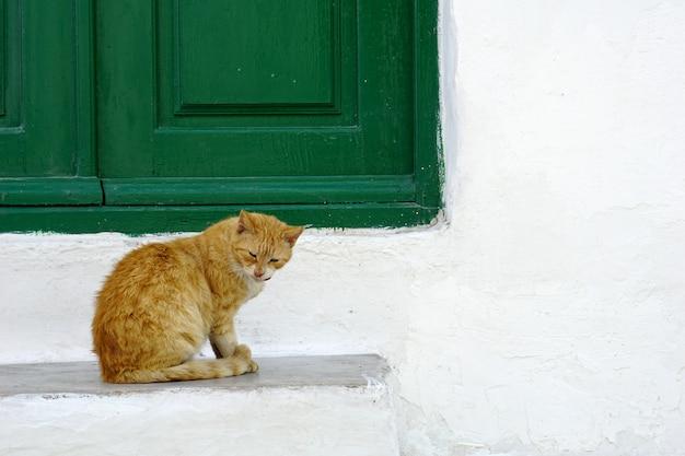 Gato bonito sentado em frente a janela verde e parede branca Foto Premium