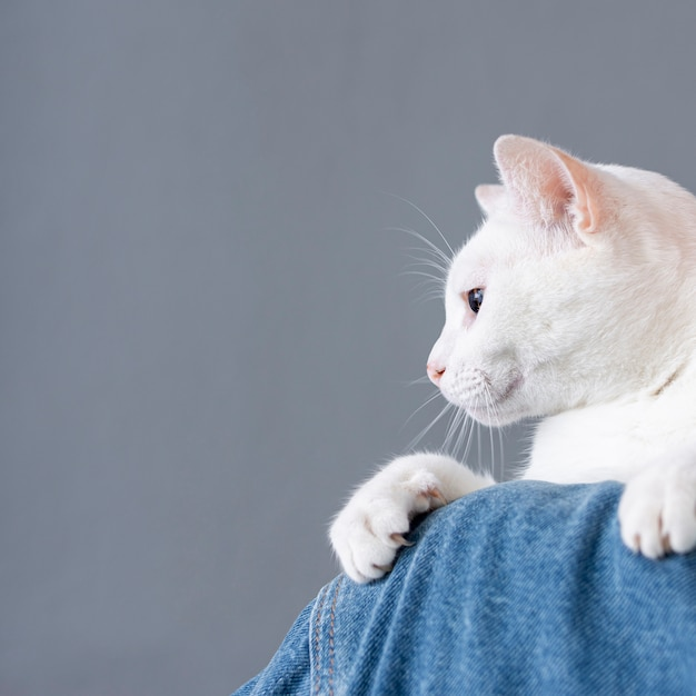 Gato branco sentado no ombro da mulher Foto gratuita