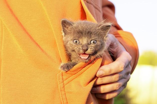Gato cinza nas mãos. gatinho sorrindo sentado no bolso da roupa laranja. copie o espaço Foto Premium