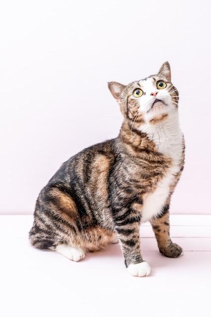Gato cinzento bonito Foto Premium