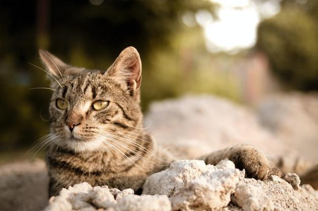 Gato com olhos verdes Foto gratuita
