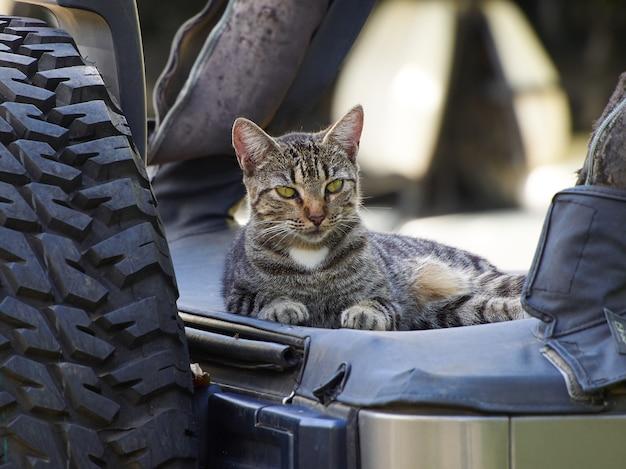 Gato com sono está sentado em um carro. Foto Premium