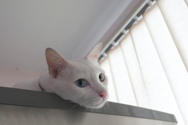 Gato, curiosamente, espiando Foto Premium