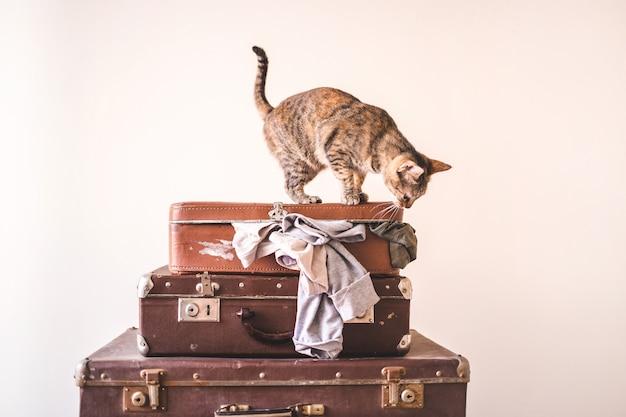 Gato curioso senta-se em malas vintage no contexto de uma parede de luz. espaço de cópia estilo retro rústico Foto Premium