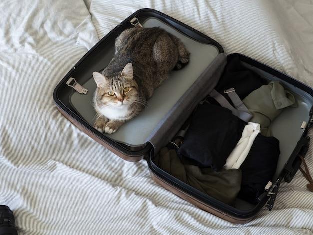 Gato de estimação pronto para viajar o sono na mala com bagagem na cama Foto Premium