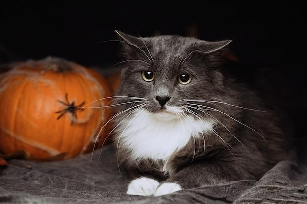 Gato de halloween deitado na cama Foto Premium
