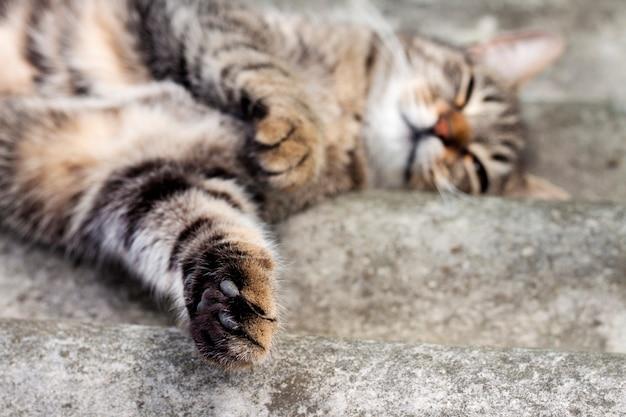 Gato deitado em um telhado de ardósia e descansando com pata Foto Premium