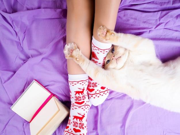 Gato deitado no sofá na sala de estar decorada para o natal, pernas femininas em meias de natal. Foto Premium