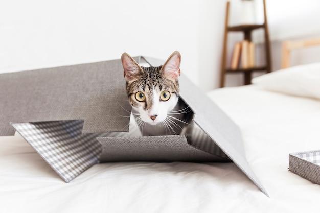 Gato dentro da caixa de papel Foto gratuita