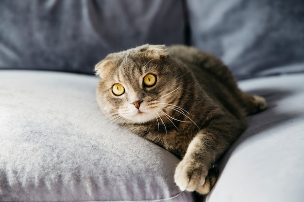 Gato descansando no sofá Foto gratuita
