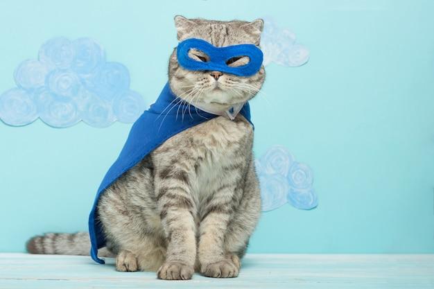 Gato do super-herói, whiskas escoceses com um casaco azul e máscara. Foto Premium