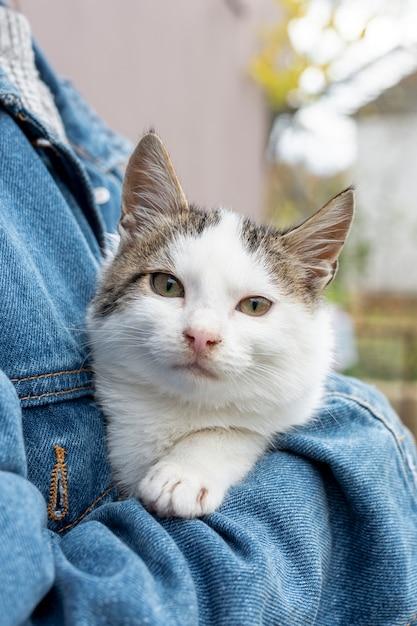 Gato doméstico bonito de alto ângulo, sentado nos braços do proprietário Foto gratuita