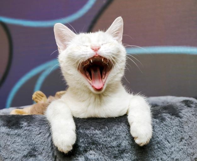 Gato em casa de brincar Foto Premium