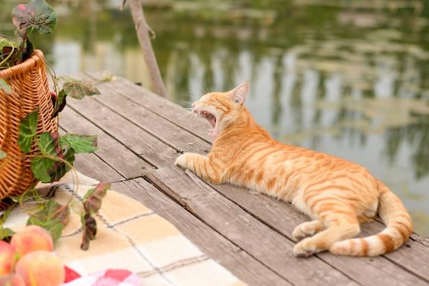 Gato engraçado em um piquenique. lindo dia de verão Foto Premium