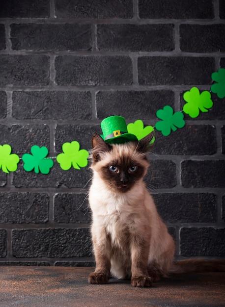 Gato engraçado no chapéu verde de duende Foto Premium