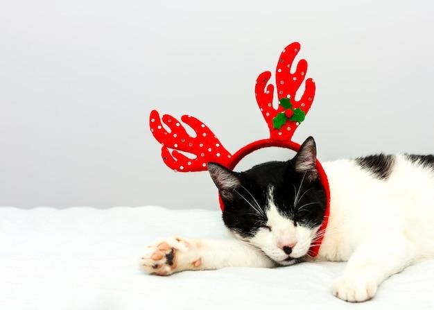 Gato engraçado preto e branco com chifres de natal vermelhos dormindo Foto Premium