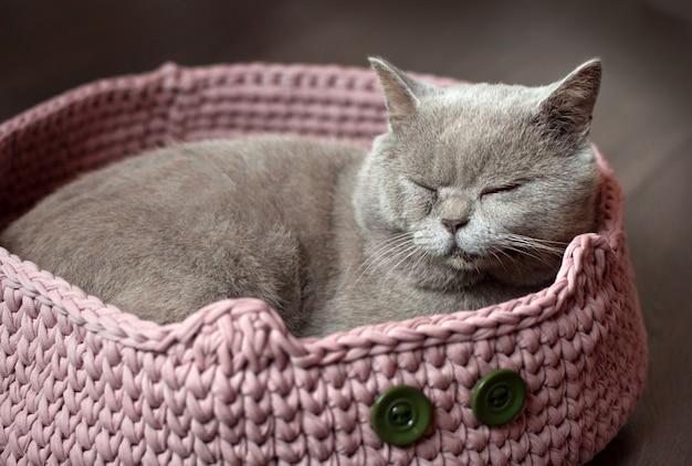 Gato escocês cinzento dorme em uma cama de gato rosa Foto Premium