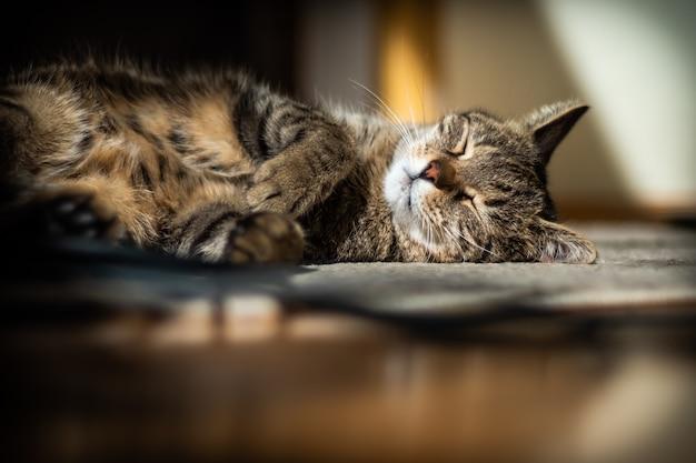 Gato fofo deitado no chão em casa Foto gratuita