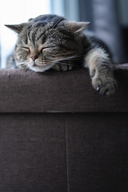 Gato gatinho fofo dormindo no sofá no meu sonho de gato em casa Foto Premium