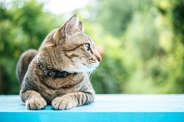 Gato malhado no chão de cimento azul e olhando para a esquerda Foto gratuita