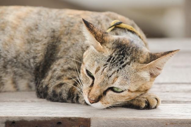 Gato marrom deitado em uma cadeira de madeira velha Foto Premium