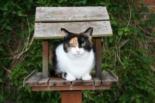 Gato na casa de passarinho Foto gratuita