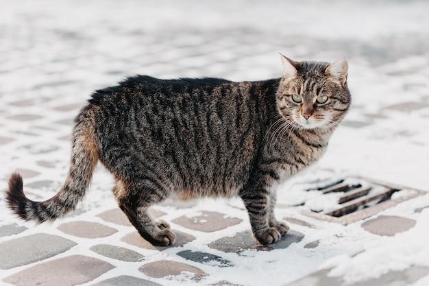 Gato na rua no inverno Foto Premium