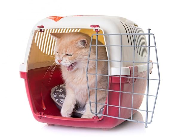 Gato no canil Foto Premium