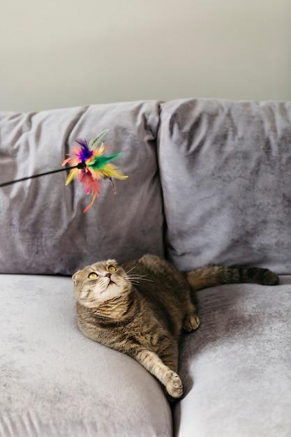 Gato olhando brinquedo deitado no sofá Foto gratuita