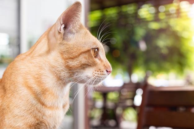 Gato olhando para fora vista Foto Premium